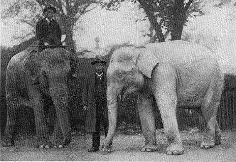 Albino-elephant